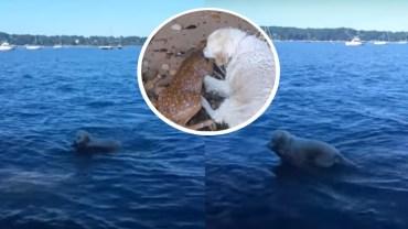 Zobaczył tonącą sarenkę i skoczył jej na pomoc. To nagranie podbija internet, bo pokazuje ile serca mają zwierzęta!