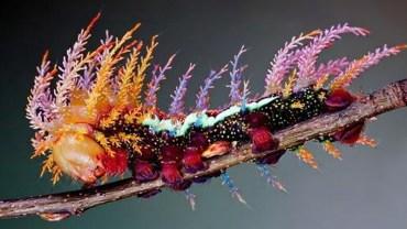 Wygląd tych stworzeń zapiera dech w piersiach! Nie przybyły z kosmosu, lecz żyją wśród nas. Wystarczy tylko dobrze ich poszukać