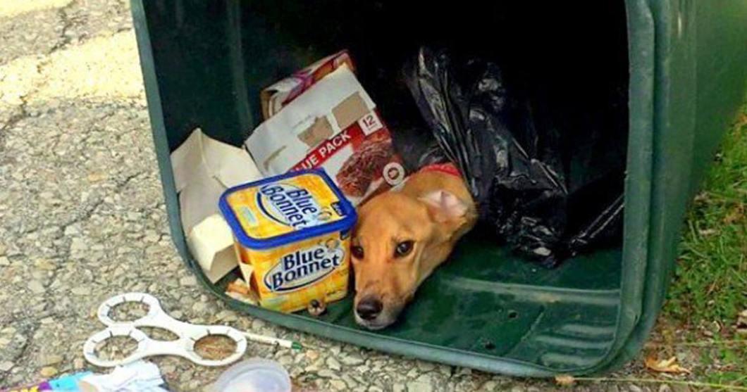 Uznali, że pies będzie im zawadzał w nowym domu. Podczas przeprowadzki wyrzucili wychudzone zwierzę do kosza!