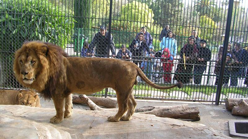 60 lat temu w zoo można było podziwiać nie tylko zwierzęta, ale i ludzi. To jedna z najwstydliwszych kart w historii Europy