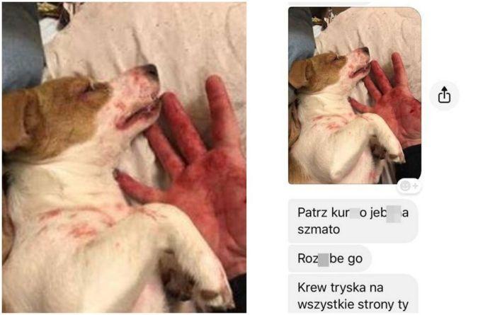 """Zostawiła go dziewczyna więc skatował psa! """"Patrz kur*o, krew tryska na wszystkie strony"""""""