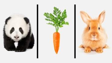 Co na obrazku jest dziwne i nie pasuje do pozostałych? Test psychologa Richarda Nisbetta ujawnia nasz sposób myślenia