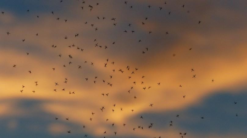 11 zapachów, które zabijają komary na miejscu. Naprawdę warto je przetestować!