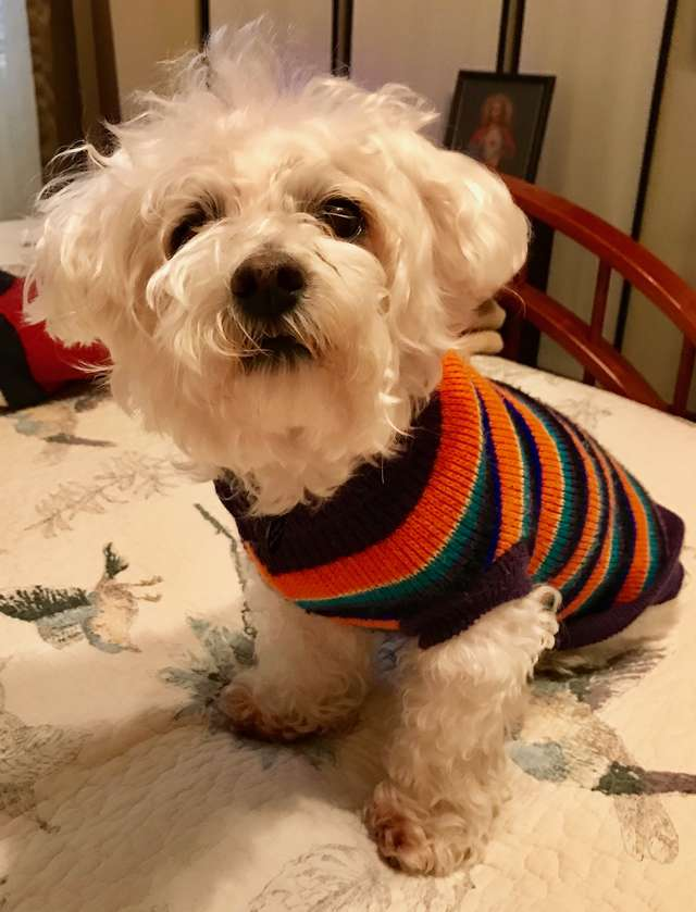 Szkoda jej było na leki, więc smarowała psa środkiem do czyszczenia dywanów. Oto efekty!