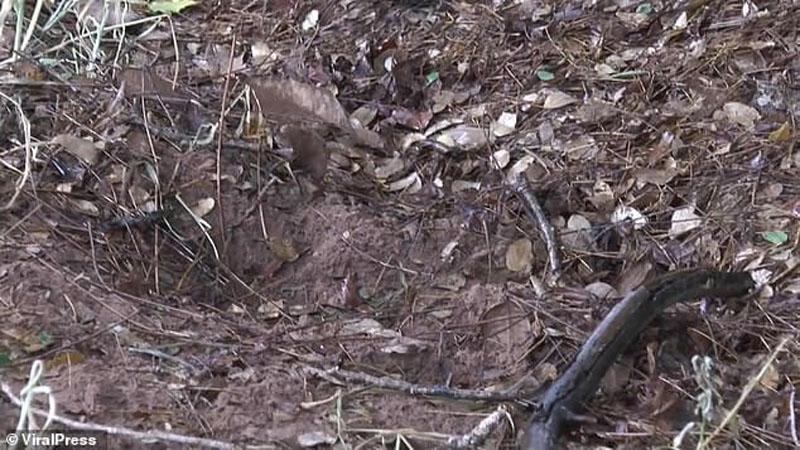 Pies odkrywa zakopane żywcem niemowlę. 15-letnia matka malucha do końca ukrywała ciążę