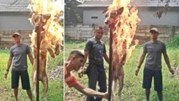Żołnierze chcieli pokazać, jacy są męscy, wzięli więc psa, nabili go na pal i podpalili, świetnie się przy tym bawiąc