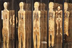 Coupes verticales de corps humains