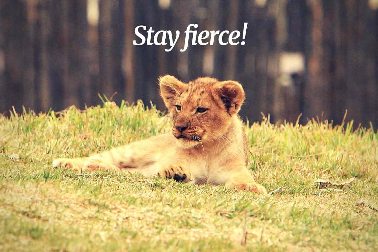 stay fierce, young lion