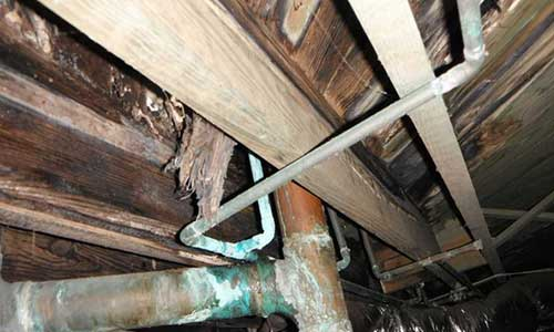 Crawl Space Wood Rot Chesapeake VA