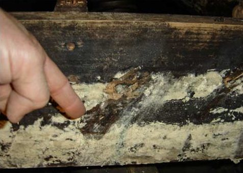 Mold in crawl space has destroyed the floor joists and support beams of the house.