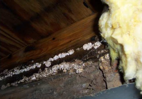 Protect your home and moisture proof your crawl space with CrawlSeal Encapsulation System
