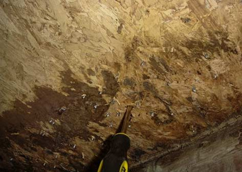 Wood Rot due to Moisture and humidity cause major damage to a crawl space and your home