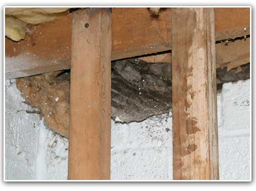 This home suffered from a musty basement smell from mold. The mold grew from the moisture problem - which turned into a complete structural problem.