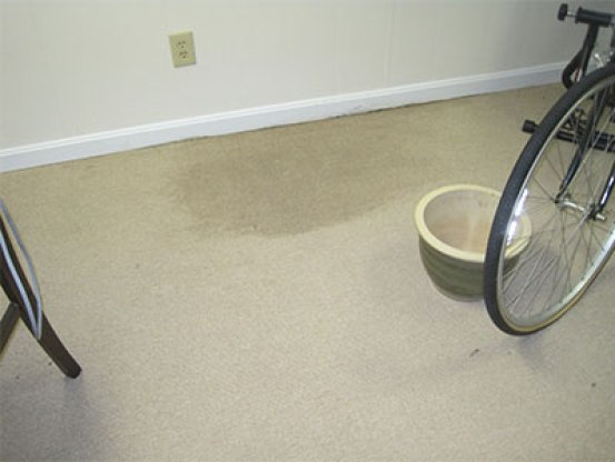 Wet carpet in a basement
