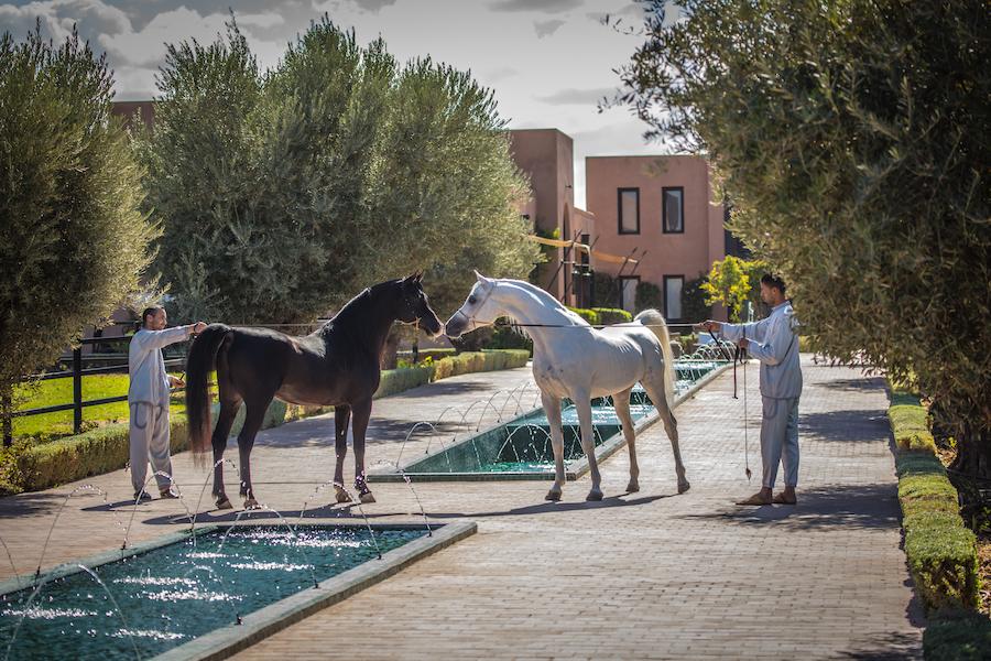 Une Saint-Valentin placée sous le signe de l'Art Équestre au Selman Marrakech
