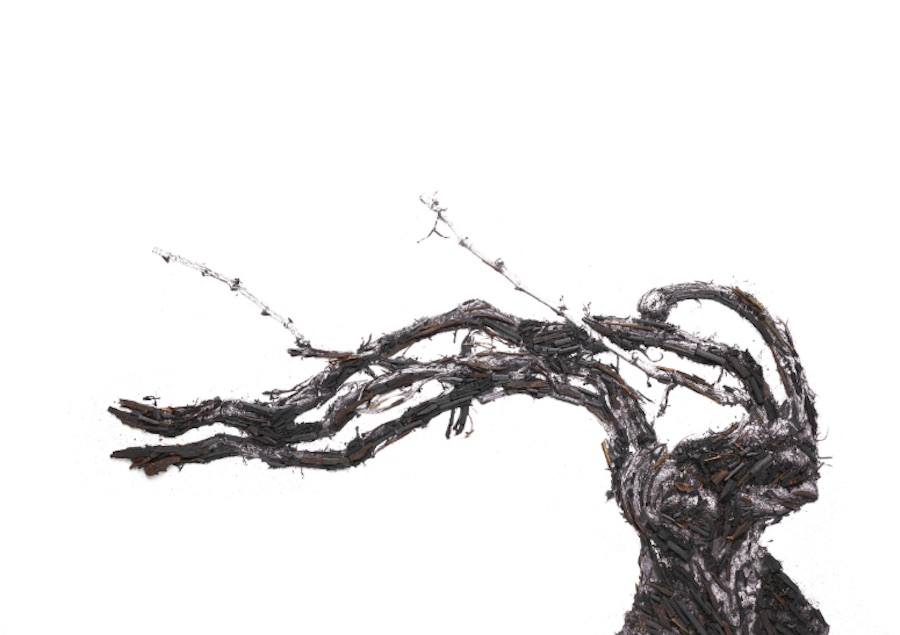 La Maison Ruinart dévoile l'exposition Shared Roots avec l'artiste Vik Muniz