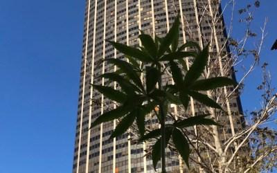 Botanys fleurit la capitale et donne la possibilité aux parisiens de participer au grand concours de lancement de la marque !