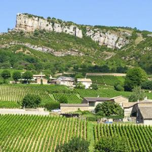 Wine tour in Burgundy. France