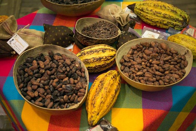 Grenada cocoa bean pods