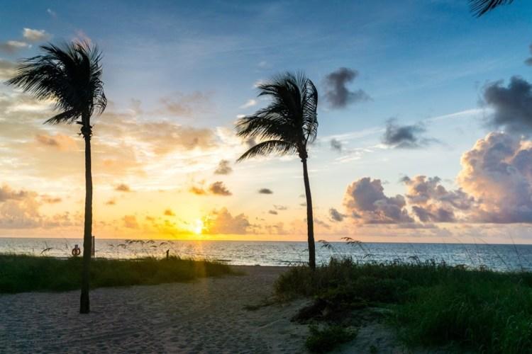 Florida palm trees on the beach