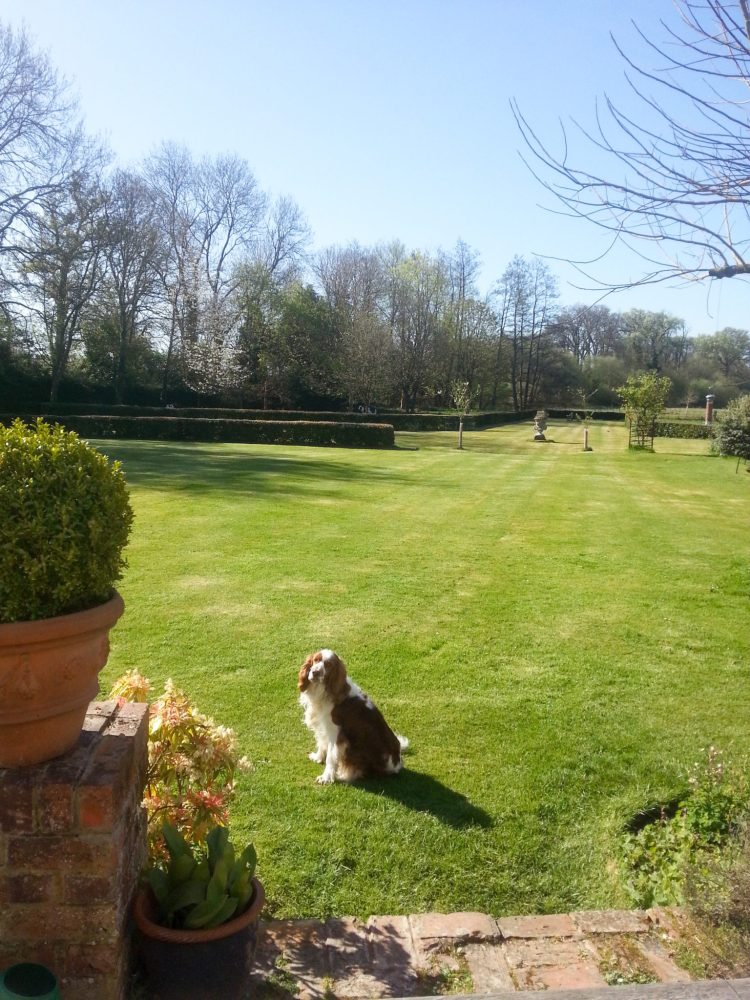Pet-Sitting-In-England