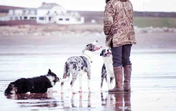 person together with three dogs standing on shore
