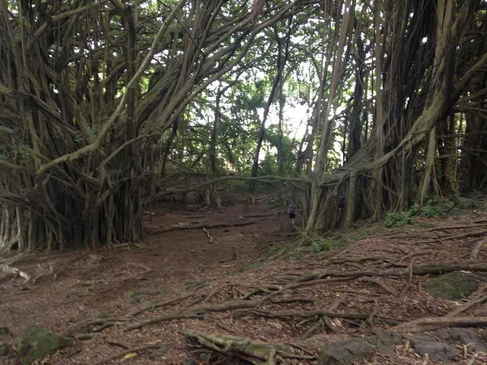 Big Island, Landscape