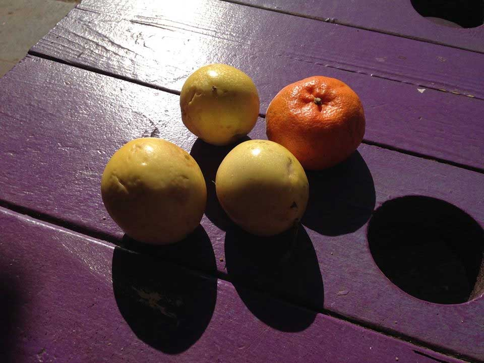 Passionfruit and clementines