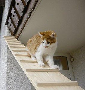 Elmato Cat escaliers, 3m