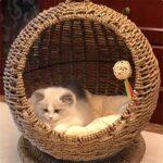 Hamac Pour Chat Chat hamac rond hiver chat nid universel semi-fermé ouvert avec coussin lavable chat lit bébé panier fournitures pour animaux de compagnie La Meilleure Perche De Lit De Fenêtre Pour Ch