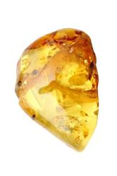 uncut yellow amber with insect in it