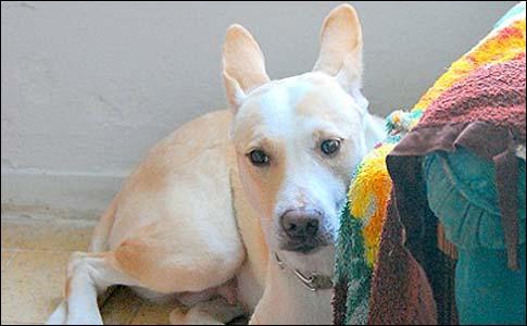Louisa saved her owner's life in Ashkelon.