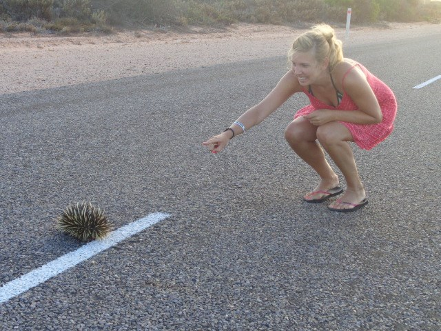 Meeting a hedgehog on a highway in Australia... never forget to live your dream!