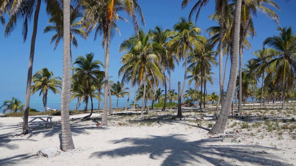 Lunchbreak on paradise island