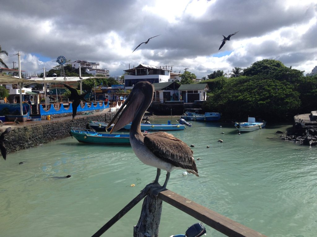 Daily fish hunting show starring Mr. Pelican!