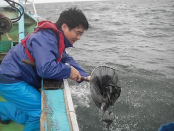 ヒラメの稚魚放流2010