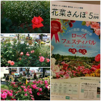 201605ローズフェスティバル花菜ガーデン