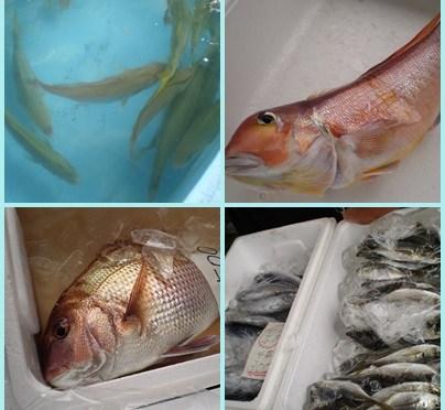 今日も「地どれ魚直売会」無事に終了。お越しいただいた皆様ありがとうございました。次回は10/28(金)です。