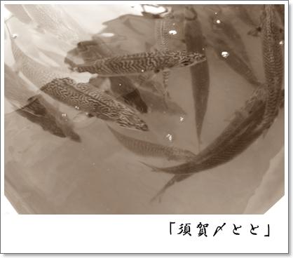須賀〆とと