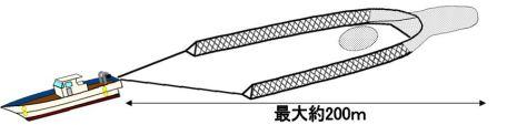 しらす船の特徴2