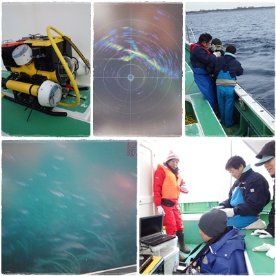 2014.2.19間伐材を使った漁礁確認