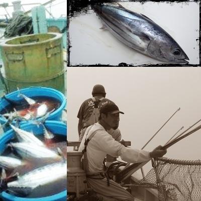 伝統かつおの一本釣り漁業