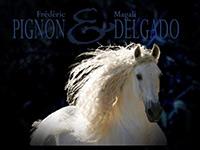 Pignon / Delgado