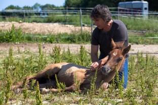 Jean-François Pignon - Dresseur de chevaux en liberté - Stage