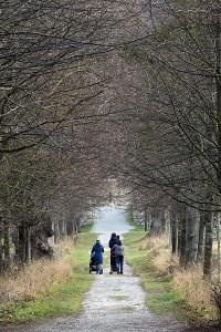 Die Allee, Naturpark DIE WÜSTE Mannersdorf