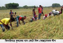 Photo of ঝিনাইদহে কৃষকের ধান কেটে দিল স্বেচ্ছাসেবক লীগ