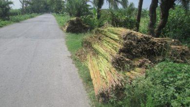 Photo of ঝিনাইদহ-সহ ৬ জেলায় পানির অভাবে বিপাকে পাট চাষিরা