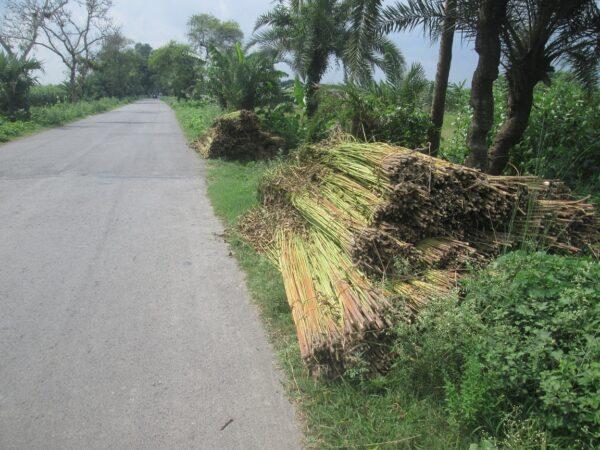 ঝিনাইদহ-সহ ৬ জেলায় পানির অভাবে বিপাকে পাট চাষিরা