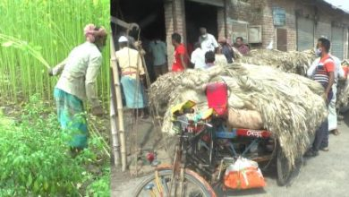Photo of ঝিনাইদহে পাট ঘরে তুলতে ব্যস্ত চাষি/দাম কমে যাওয়ায় খুষি নয় চাষি
