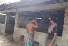 Photo of ঝিনাইদহ গঞ্জের আলীর কান্না থামছে না/এক রাতেই ৭ গরু চুরি